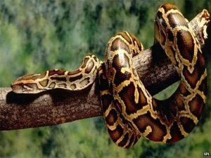 Nằm mơ thấy rắn có ý nghĩa gì trong cuộc sống